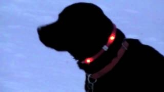 ������� ��� ����� ������������ LED Dog Collar ������������ ������� ��� �����